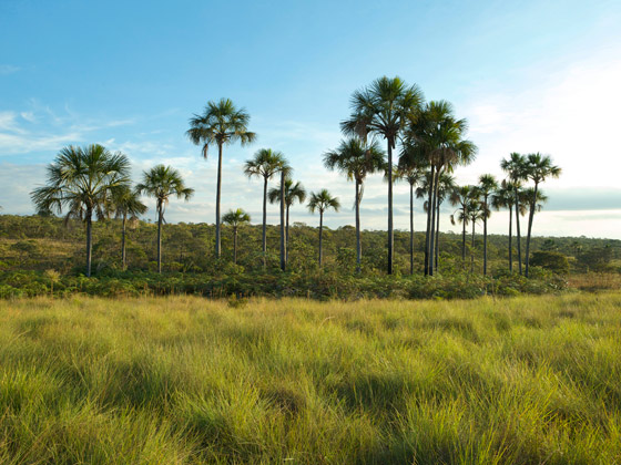 paisagem-cerrado-peter-caton-ispn